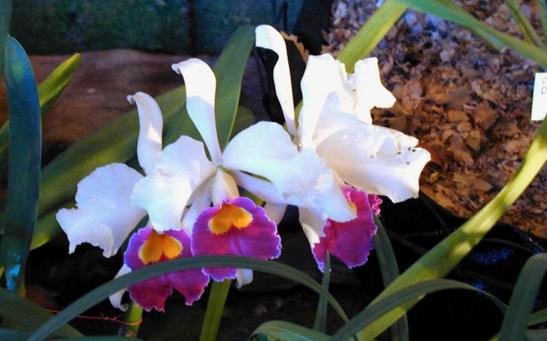 exposicion de orquideas Costa Rica