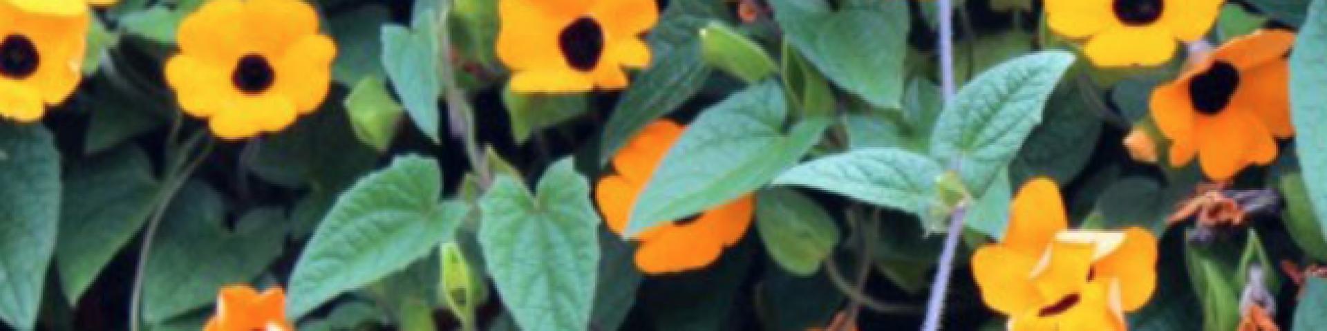 Floresdelmundo