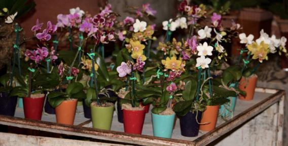 mini orquideas costa rica