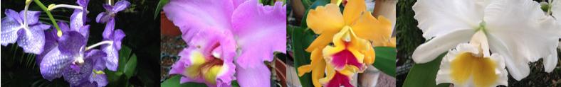 orquideas Costa Rica